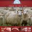 Meat-Website-Design